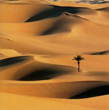 ::  ���� ��� ��� ������� ���� * ����� ���� ����� �� ��� ����� :: desert-palms.jpg